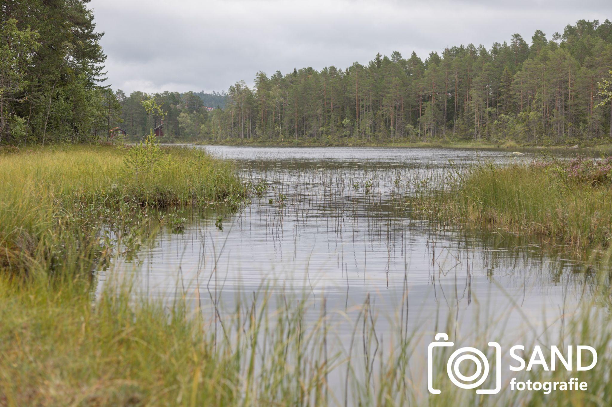 Natuur Zweden 2019 mmv Sand Fotografie