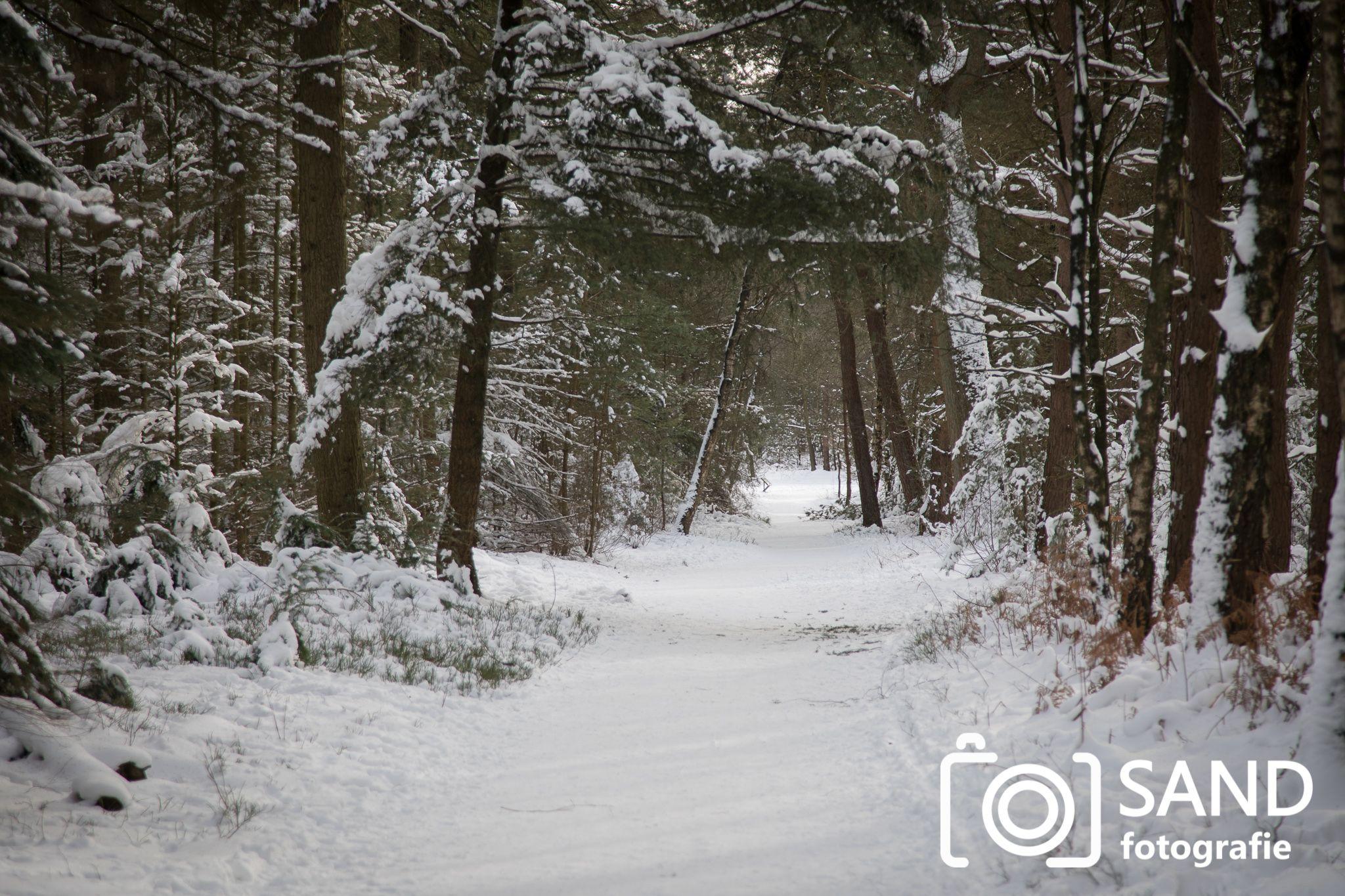 Sneeuw op de Sallandse Heuvelrug Nijverdal Sand Fotografie